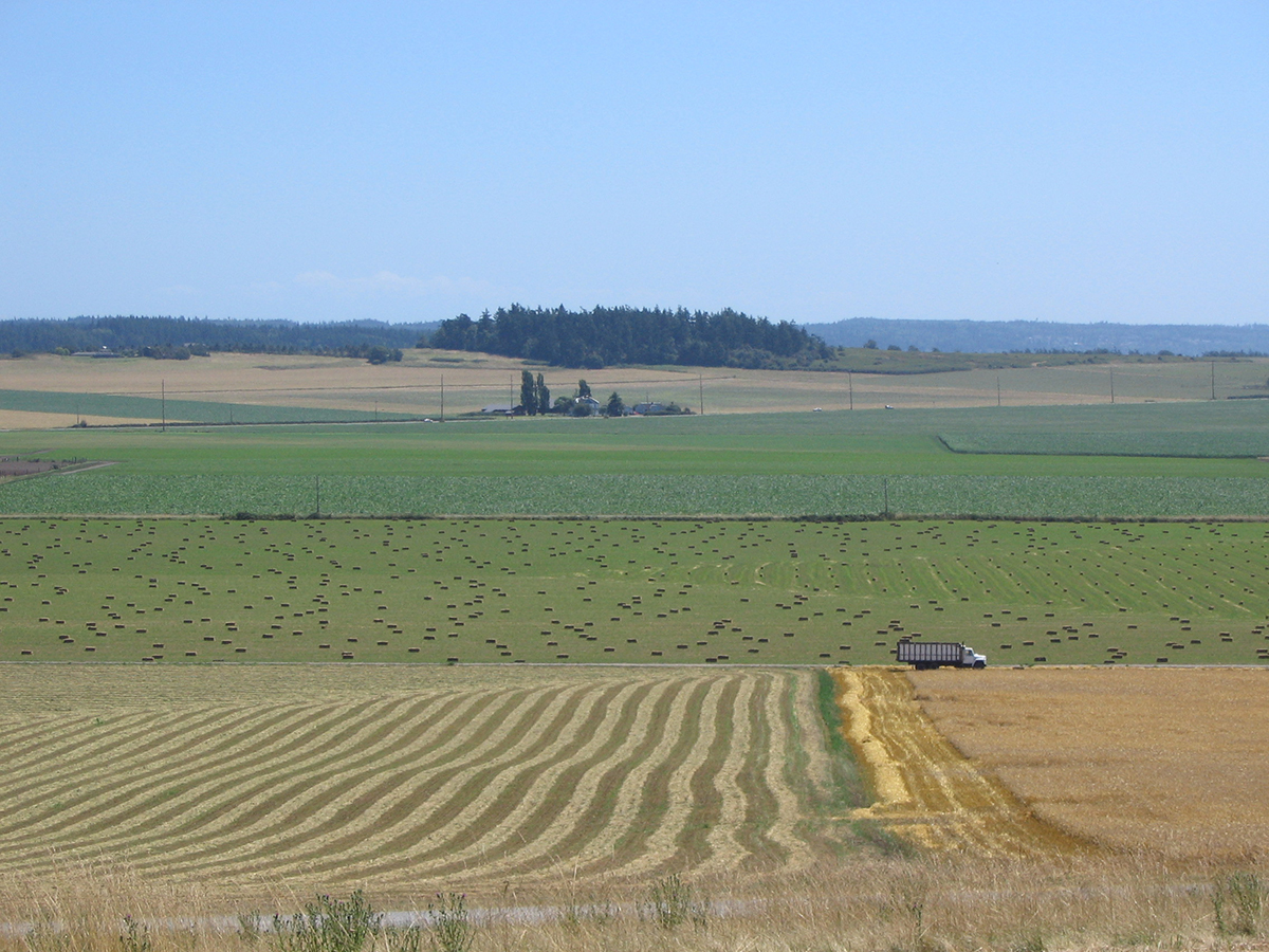 Ebey's Prairie farms